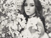 苹果树花围拢的美丽的少妇  库存图片