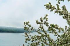 苹果树,树,春天,花,花,树,雾,湖,岸 库存照片