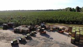 苹果树,苹果,拖拉机收获运载在大木箱,小装载者,叉架起货车的苹果装载,投入了 股票视频