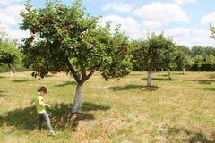 苹果树orchand和孩子 免版税库存图片