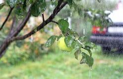 苹果汽车雨 免版税库存照片