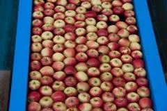 苹果生产 免版税图库摄影