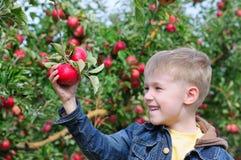 苹果男孩逗人喜爱的果树园 免版税图库摄影
