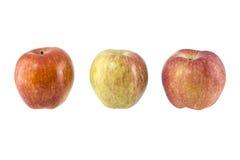 苹果白色的背景关闭 图库摄影