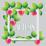 苹果秋天对光检查袋装花瓶的构成干燥叶子 在灰色背景的苹果 库存图片