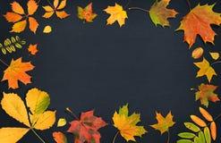 苹果秋天对光检查袋装花瓶的构成干燥叶子 在黑暗的背景的秋天五颜六色的叶子 顶视图 库存照片