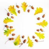 苹果秋天对光检查袋装花瓶的构成干燥叶子 框架由秋叶和杉木锥体做成在白色背景 平的位置,顶视图,拷贝空间 免版税库存图片