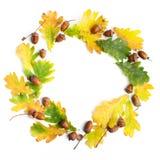 苹果秋天对光检查袋装花瓶的构成干燥叶子 框架由秋叶和杉木锥体做成在白色背景 平的位置,顶视图,拷贝空间 库存图片