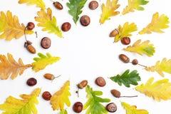 苹果秋天对光检查袋装花瓶的构成干燥叶子 框架由秋叶和杉木锥体做成在白色背景 平的位置,顶视图,拷贝空间 免版税库存照片
