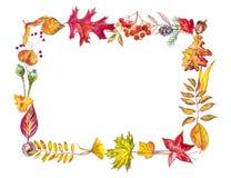 苹果秋天对光检查袋装花瓶的构成干燥叶子 框架由秋天莓果和叶子制成在白色背景 提供例证公园池塘天鹅结构水彩的子项 库存照片