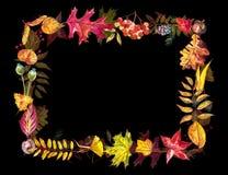 苹果秋天对光检查袋装花瓶的构成干燥叶子 框架由秋天莓果和叶子制成在白色背景 提供例证公园池塘天鹅结构水彩的子项 免版税图库摄影