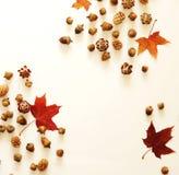 苹果秋天对光检查袋装花瓶的构成干燥叶子 秋叶框架,橡子,在白色背景的杉木锥体 免版税库存图片