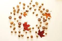 苹果秋天对光检查袋装花瓶的构成干燥叶子 秋叶框架,橡子,在白色背景的杉木锥体 免版税图库摄影
