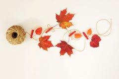 苹果秋天对光检查袋装花瓶的构成干燥叶子 秋叶 库存照片