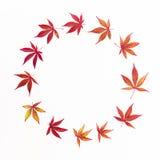 苹果秋天对光检查袋装花瓶的构成干燥叶子 秋天槭树花圈框架在白色背景离开 平的位置,顶视图 图库摄影