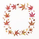 苹果秋天对光检查袋装花瓶的构成干燥叶子 花圈框架由秋天槭树制成在白色背景离开,杉木锥体 平的位置,顶视图 免版税库存图片