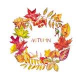 苹果秋天对光检查袋装花瓶的构成干燥叶子 花圈由秋天莓果和叶子制成在白色背景 提供例证公园池塘天鹅结构水彩的子项 库存图片