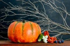 苹果秋天对光检查袋装花瓶的构成干燥叶子 库存图片