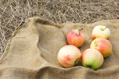 苹果秋天收获 感恩日 免版税库存图片
