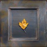 苹果秋天美好的花卉框架离开装饰品照片 免版税库存图片