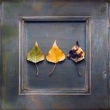 苹果秋天美好的花卉框架离开装饰品照片 免版税库存照片