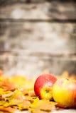 苹果秋天边界叶子 免版税图库摄影