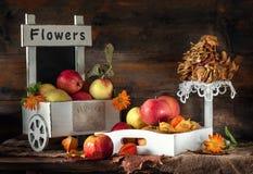 苹果秋天静物画在一个箱子的有苹果计算机芯片和fezalis的 图库摄影