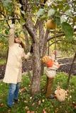苹果秋季庭院集合mather儿子 库存照片