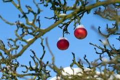 苹果第一个红色雪结构树 库存照片