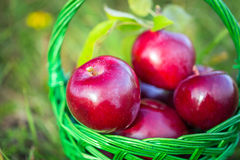 苹果篮子其次布料刀子红色到二 库存照片