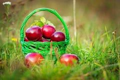 苹果篮子其次布料刀子红色到二 免版税库存图片