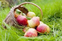 苹果篮子在草的 免版税库存图片