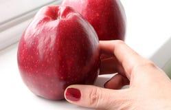 苹果红色二 免版税库存照片