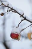 苹果红色多雪的冬天 免版税图库摄影