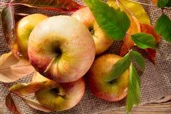 苹果红色成熟 图库摄影