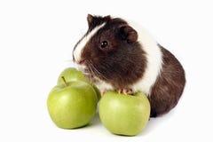 苹果绿色试验品 库存图片