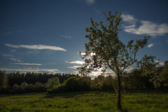 苹果美好的例证结构树向量 免版税库存照片