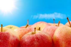 苹果背景天空 库存图片