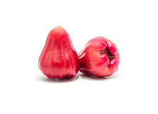 苹果背景玫瑰白色 免版税库存图片
