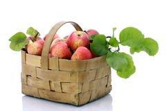 苹果背景篮子红色白色 库存图片