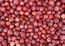 苹果背景红色 库存照片