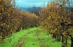 苹果苹果分行结果实叶子果树园 免版税库存图片