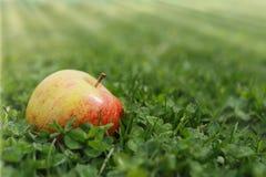 苹果草绿色红色 库存图片