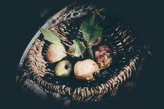 苹果葡萄酒感觉 库存照片