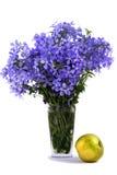 苹果蓝色花束花 库存图片
