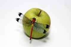 苹果蜻蜓 免版税库存图片
