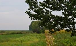 苹果覆盖花横向草甸本质星期日结构树 库存图片