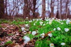 苹果覆盖花横向草甸本质星期日结构树 免版税库存图片