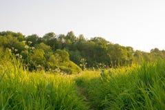 苹果覆盖花横向草甸本质星期日结构树 免版税图库摄影