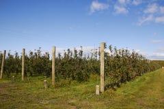 苹果计算机农场在新西兰 免版税图库摄影
